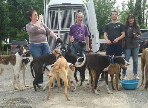 arrivo_Greyhound