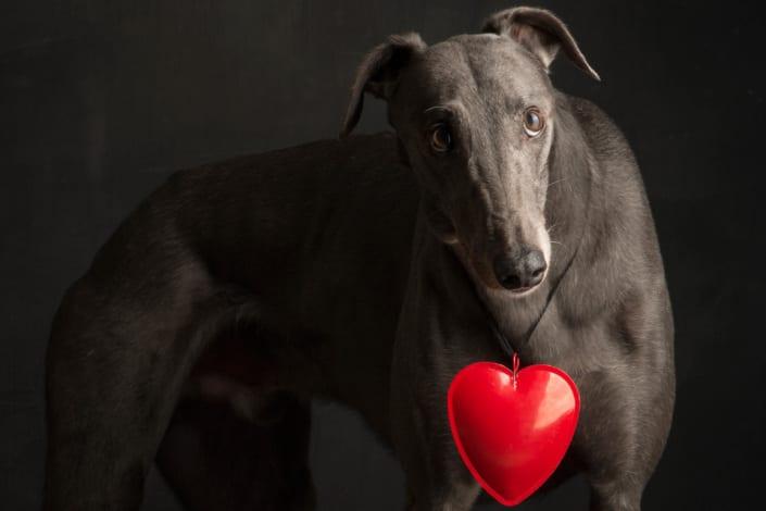 arrivo Greyhound 08-11