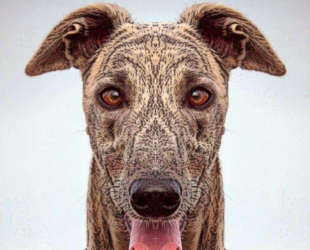 Arrivo Greyhound 2 maggio 2015