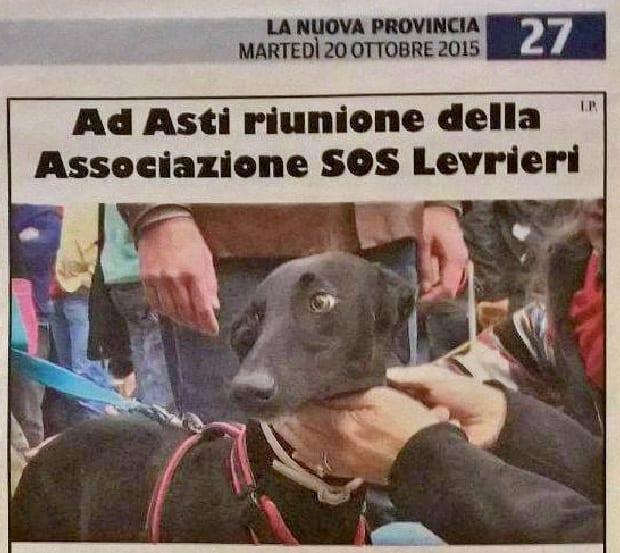 Ad Asti riunione dell'Associazione SOS Levrieri