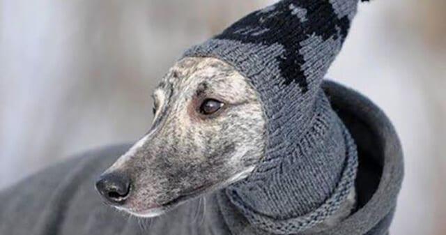 Arrivo Greyhound