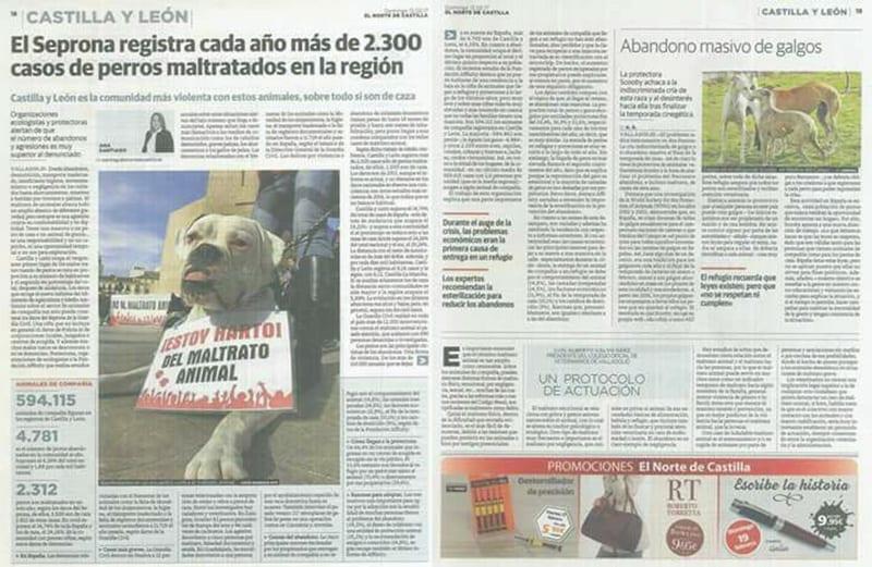 Cani maltrattati in Spagna