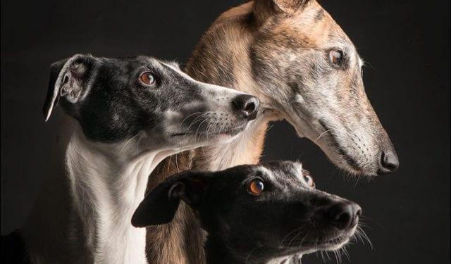 Arrivo Galgo e Greyhound - 28 Aprile 2018