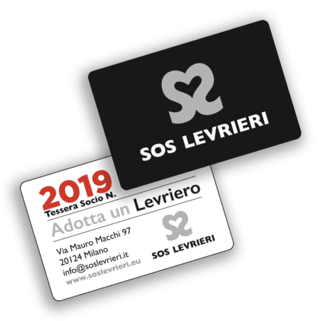 SOS Levrieri - Greyhound - Galgo - Adozioni Levrieri