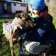 Cody - Greyhound