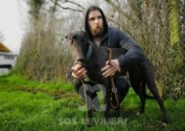 Cookie - Greyhound