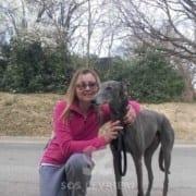 Brad - Greyhound