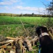 Carlos - Greyhound