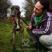 Gina - Greyhound