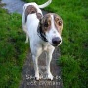 Sting - Greyhound