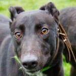 Edie Greyhound