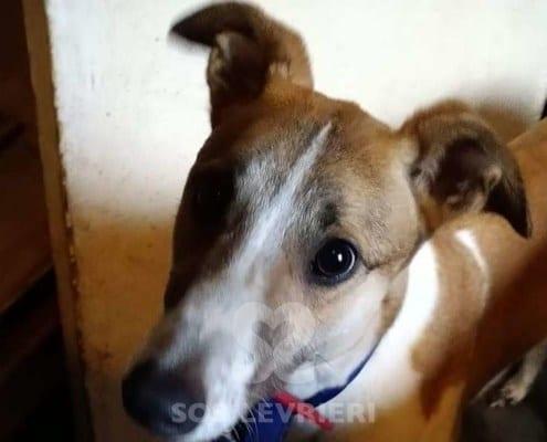 Marcia Greyhound