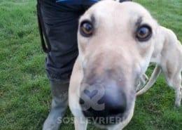 Mary Greyhound