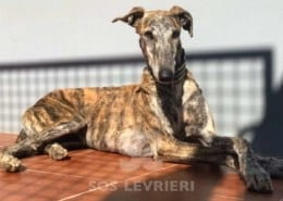 Terry Galgo