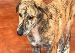 Sky Mix Galgo