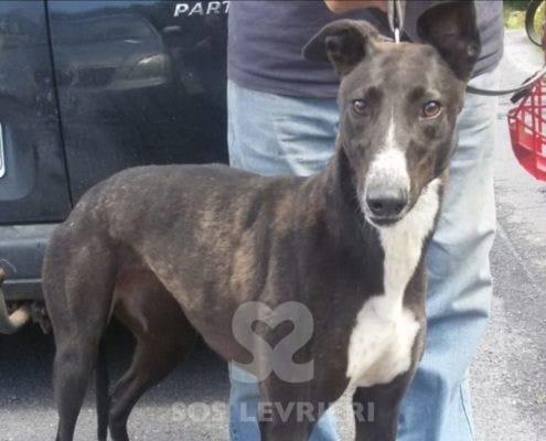 Jet Greyhound