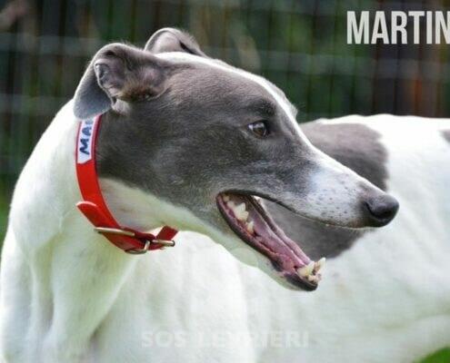 Martin Greyhound