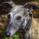 Arrivo Greyhound 12 Dicembre 2020