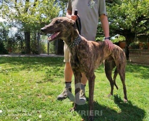 Clyde Greyhound