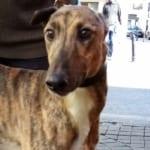 Max 3 Greyhound