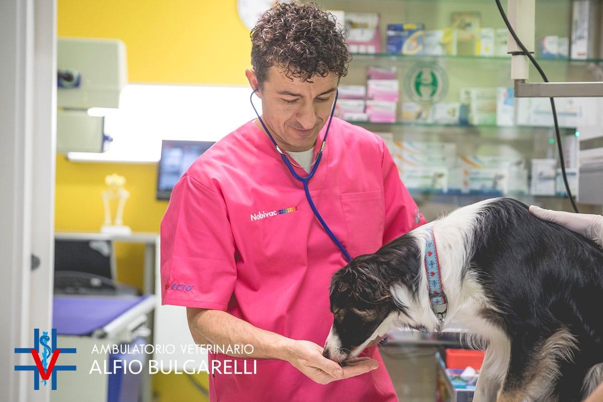 Ambulatorio Veterinario Alfio Bulgarelli - Azienda Convenzionata SOS Levrieri
