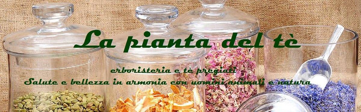 La pianta del tè – Erboristeria e tè pregiati di Maria Sciascia - Azienda Convenzionata SOS Levrieri